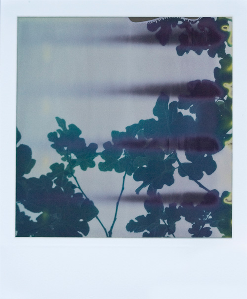 Five minutes into the developing of The Impossible Project's Fade to Black polaroid film