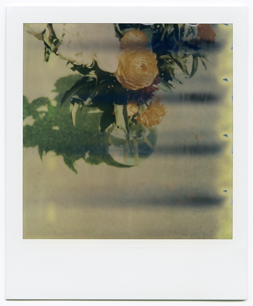 Peonies shot outside on The Impossible Project's Fade to Black polaroid film