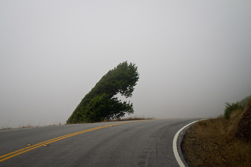 Fog on the road to Muir Woods