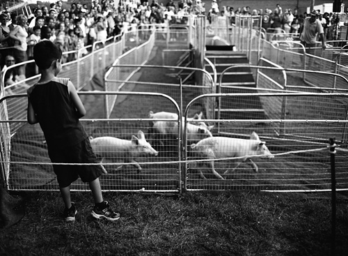 Piglet racing at the Arlington County Fair - Shot with the Mamiya m645 on Kodak 100 TMAX film