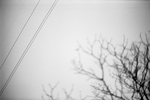 Lines and tree - Shot with the Olympus Om-2n on Kodak 100 TMAX 35mm film