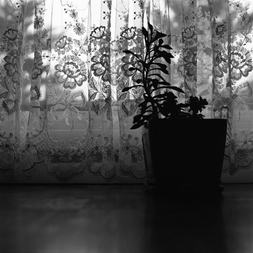 Curtain and Succulent - Shot with the Yashica Mat 124G on Kodak 400 TMAX film